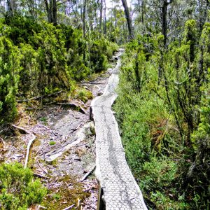 10-overland-track-board-walk-from-pelion-hut-to-pelion-gap